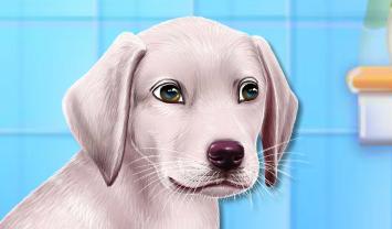 Köpek İyileştirme ve Yıkama
