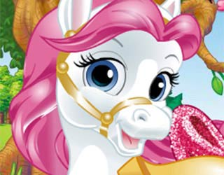 Pony Giydirme & Süsleme